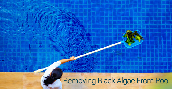 How to remove black algae in a pool solda pools for Kill black algae swimming pool