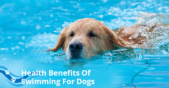 Health Benefits Of Swimming For Dogs