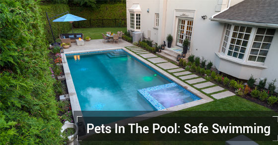 Pets In The Pool: Safe Swimming