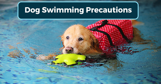 Dog Swimming Precautions