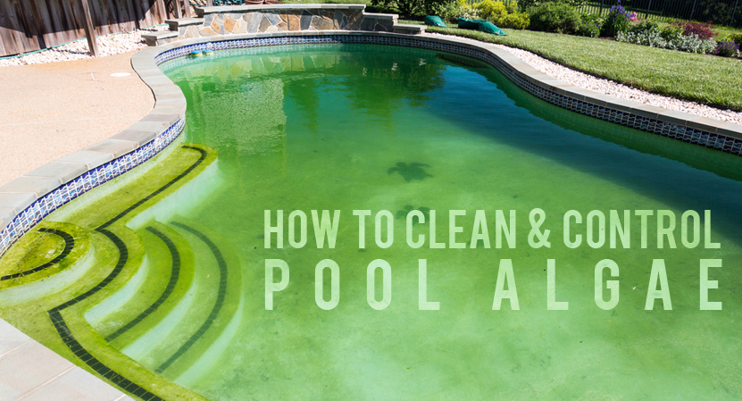 How To Clean Amp Control Pool Algae Solda Pools