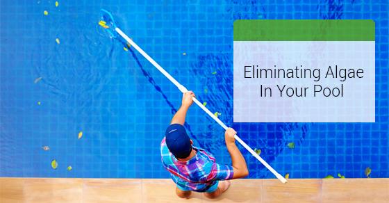 Eliminating Algae In Pool