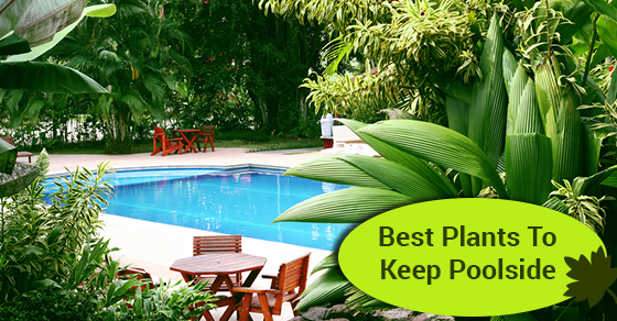 Best Plants To Keep Poolside